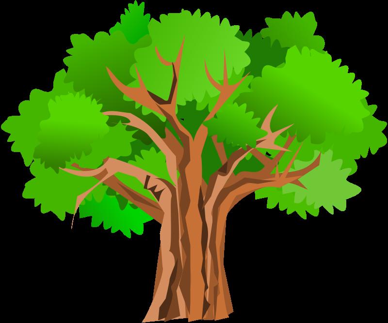 800x667 Free Clipart Tree Gurica