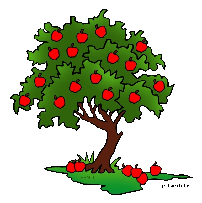 644x648 Great Of Apple Tree Clipart Transparent