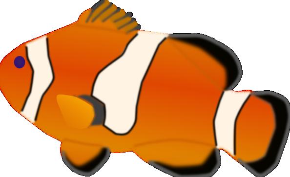 594x363 Aquarium Fish Amphiprion Percula Clip Art