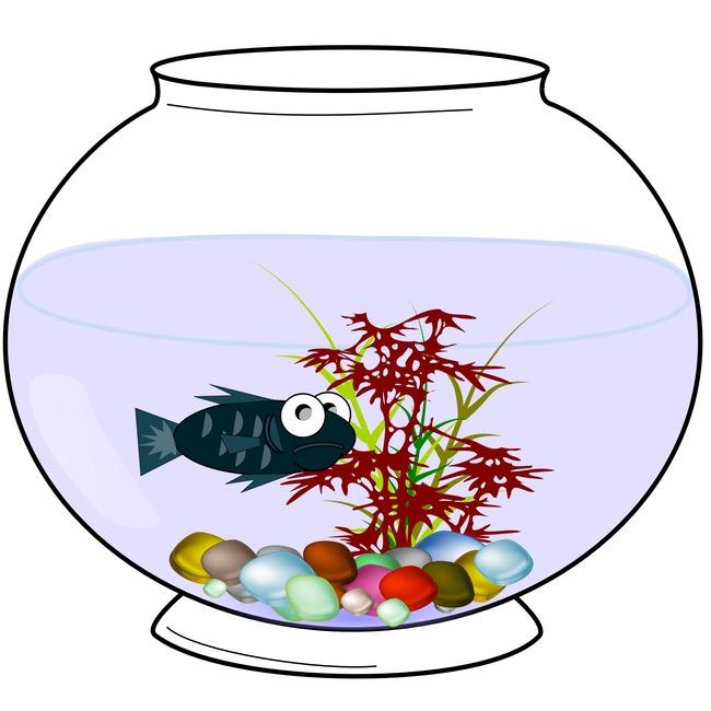 650x650 Art Aquarium, Art, Aquarium, Fish Png Image And Clipart For Free