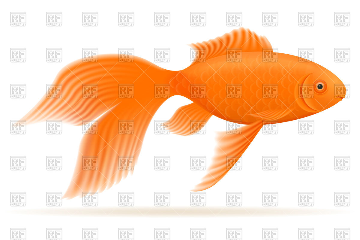 1200x800 Gold Aquarium Fish Royalty Free Vector Clip Art Image