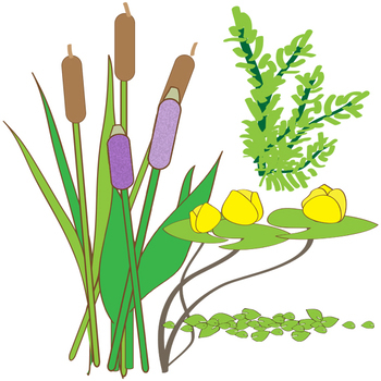 350x350 Pond Zones And Aquatic Plants Clip Art By The Painted Crow Tpt