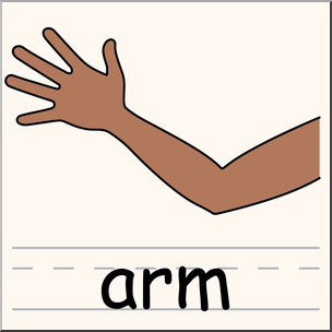304x304 Clip Art Parts Of The Body Arm Color I Abcteach