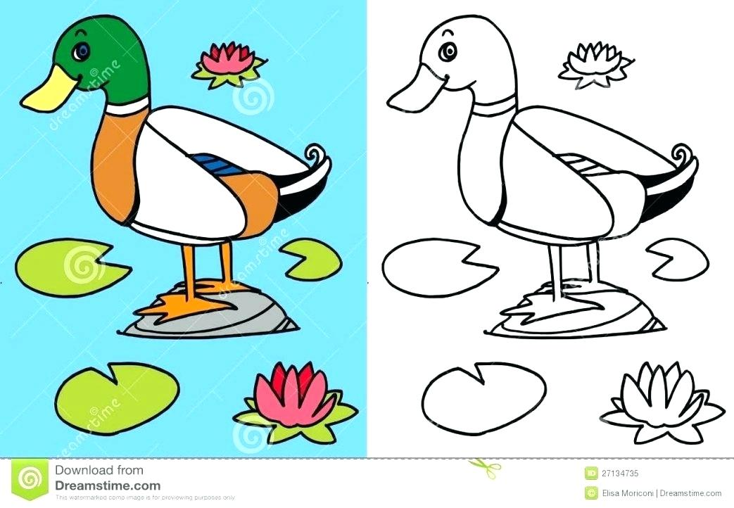 1043x722 Coloring Pages Flowers Free Printable Goose Page Flying Animal
