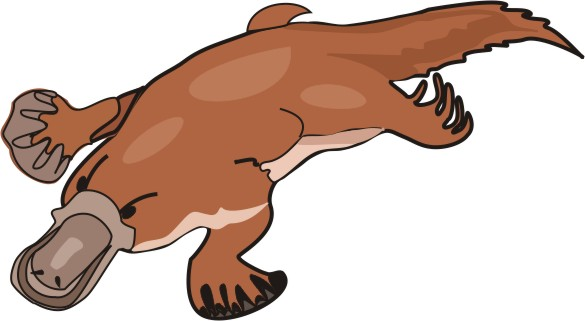 585x321 Platypus Pictures To Color Find Here