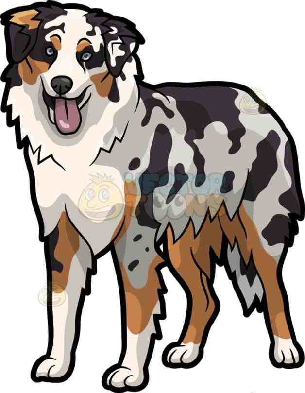 628x809 Australian Shepherd Dog Cartoon Clipart Vector Toons Dogs