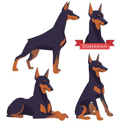 416x416 Doberman Pinscher Clip Art, Vector Images Amp Illustrations