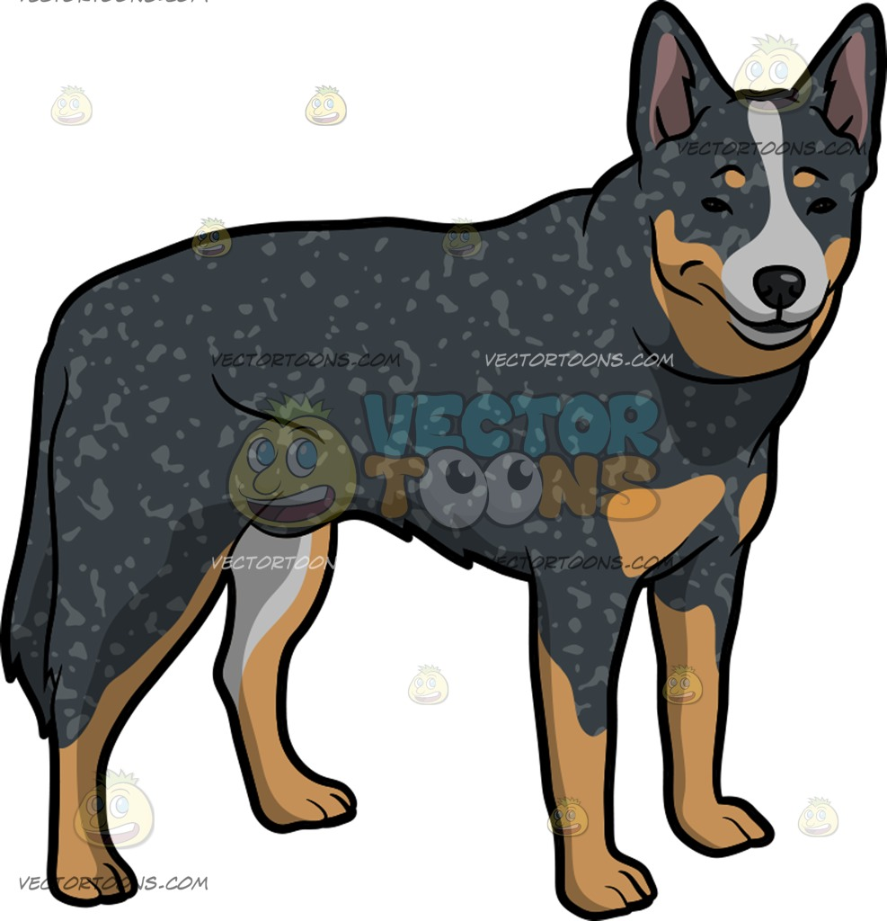 987x1024 A Charming Australian Cattle Dog Cartoon Clipart Vector Toons