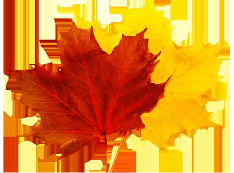 472x349 Fall Leaves Clip Art