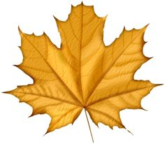 236x206 Fall Leaves Autumn Leaves Images Free Yellow Leaves Pictures Clip