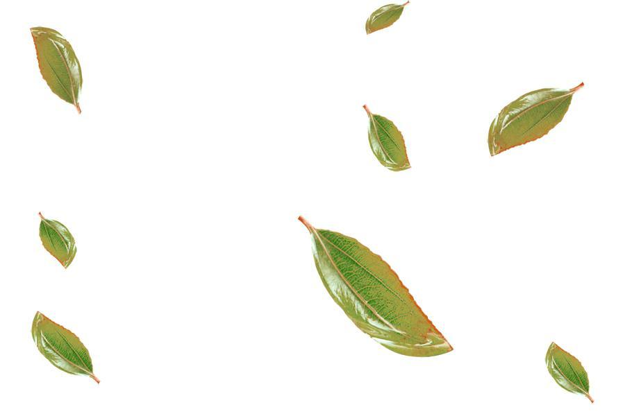 900x600 Leaves Images Clip Art Tropical Leaves Watercolor Leaves Clip Art