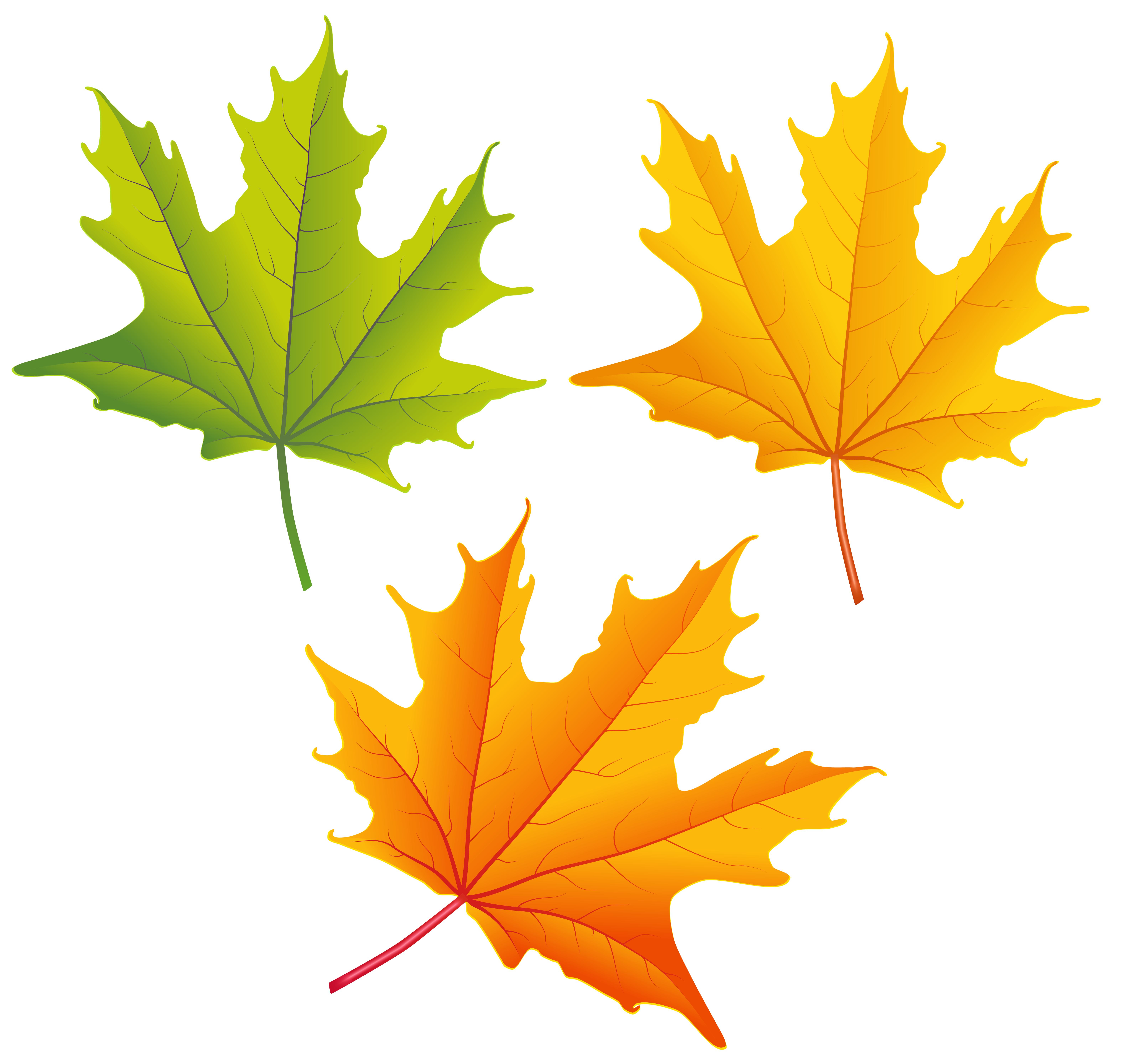 6312x5975 Set Of Autumn Leaves Png Clipart Imageu200b Gallery Yopriceville