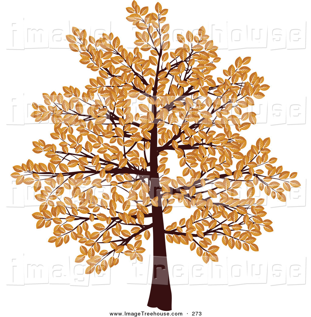 1024x1044 Clip Art Clip Art Fall Tree
