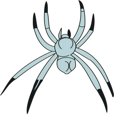 480x480 Spider Color Page Spider Coloring Pages Halloween Spider Coloring