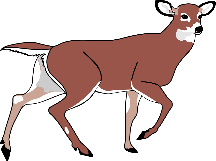900x670 Animated Deer Clipart