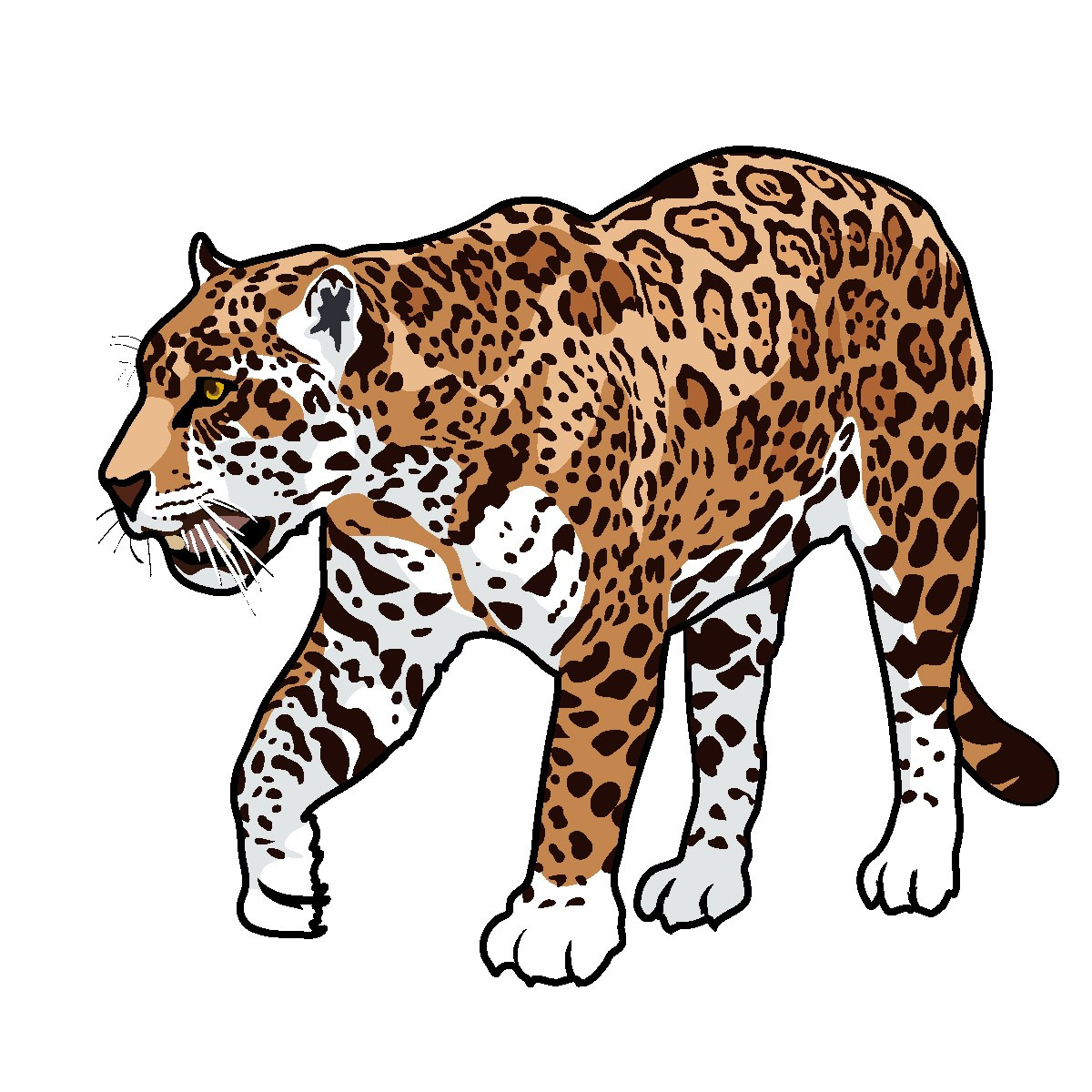 1200x1200 Cartoon Jaguar Animal Pictures