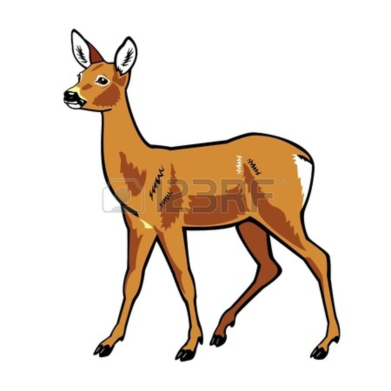 1350x1350 Baby Deer Gallery For Deer Clipart Eye