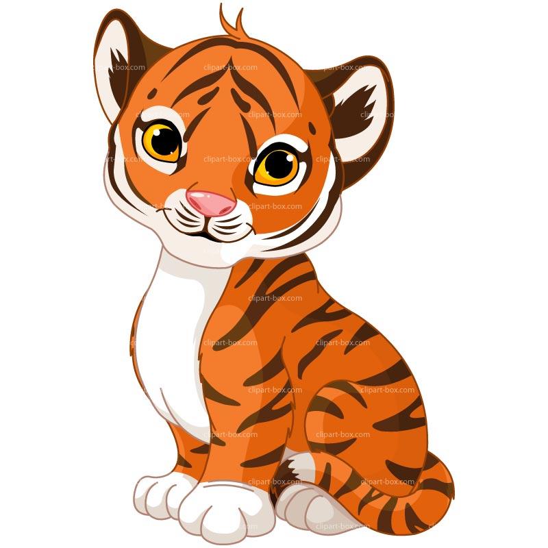 800x800 Baby Animal Clipart Orange Tiger