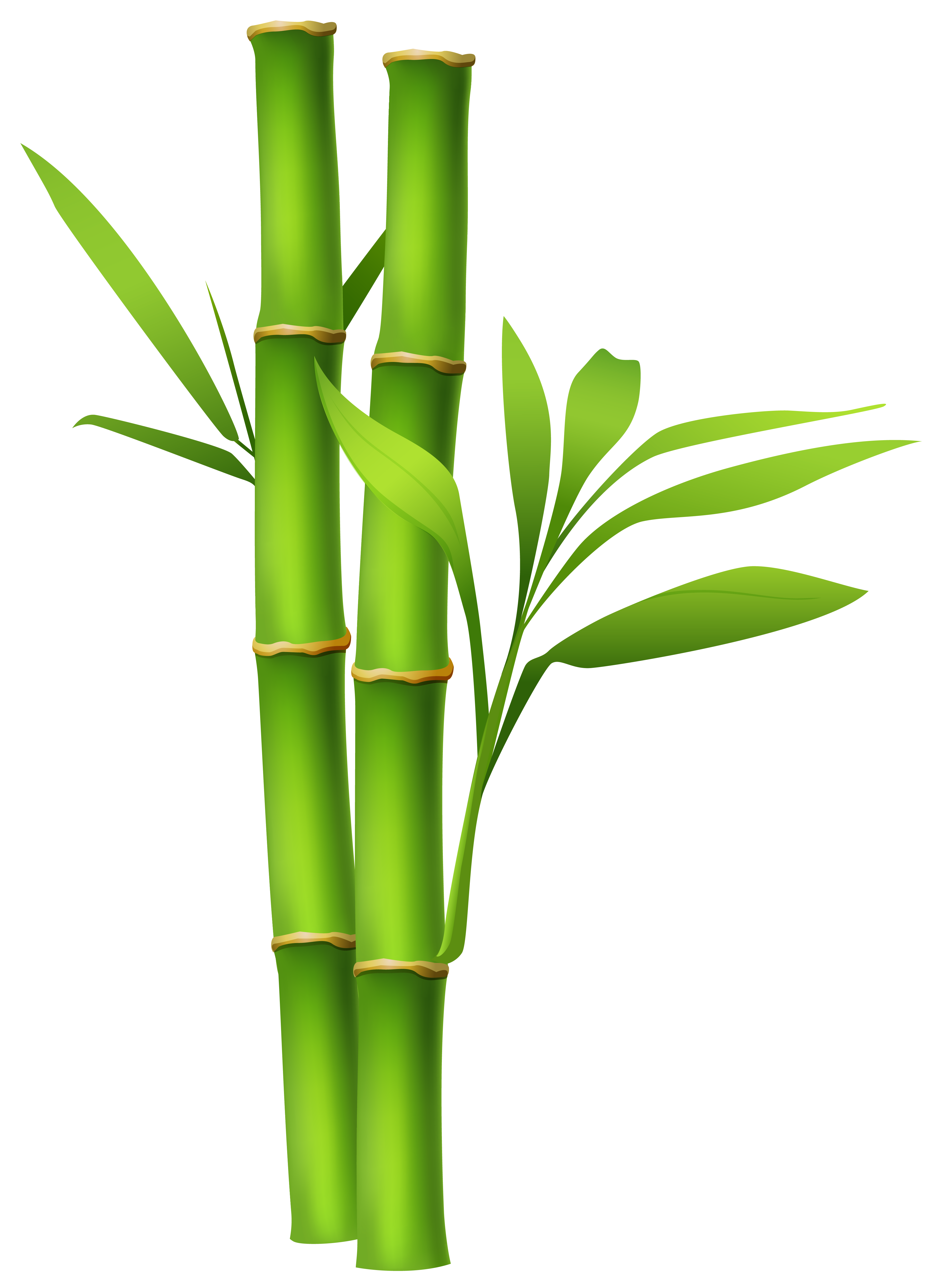 3849x5302 Bamboo Png Imageu200b Gallery Yopriceville