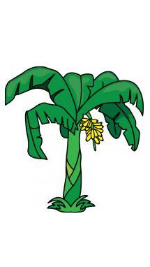 215x382 How To Draw A Banana Tree Step 11 Beautiful! Tutorials
