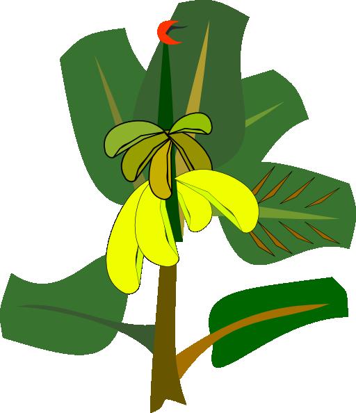 512x594 Image Of Banana Tree Clipart