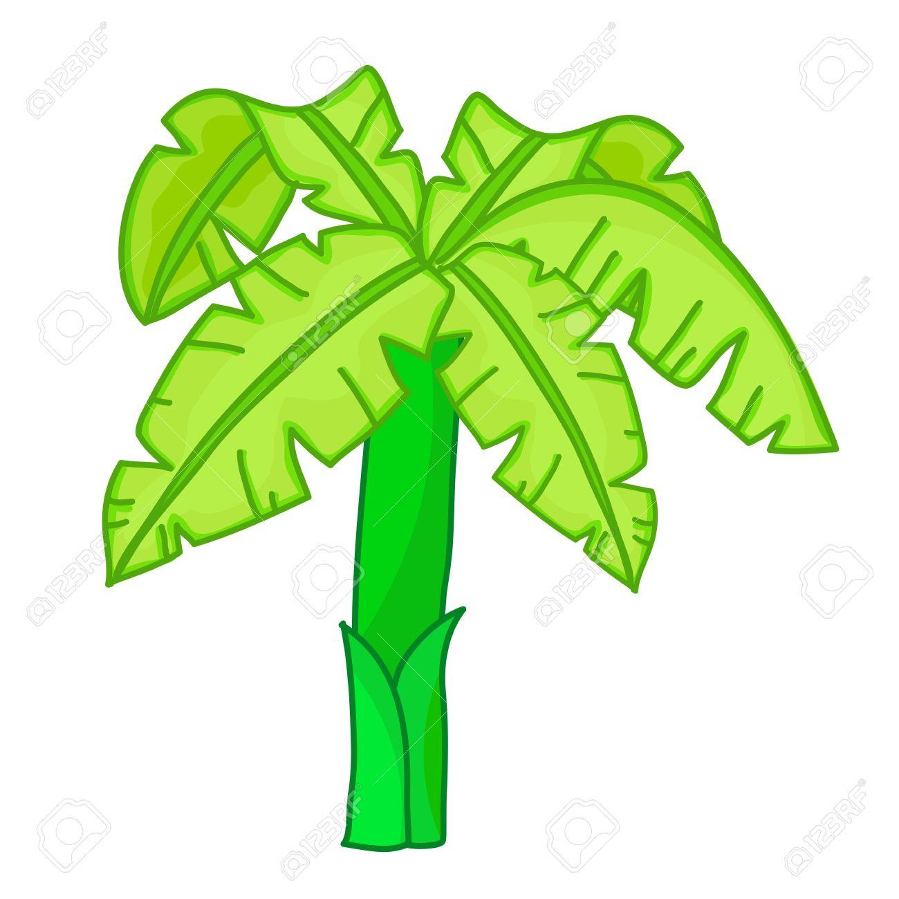 1300x1300 Photos Cartoon Banana Tree,