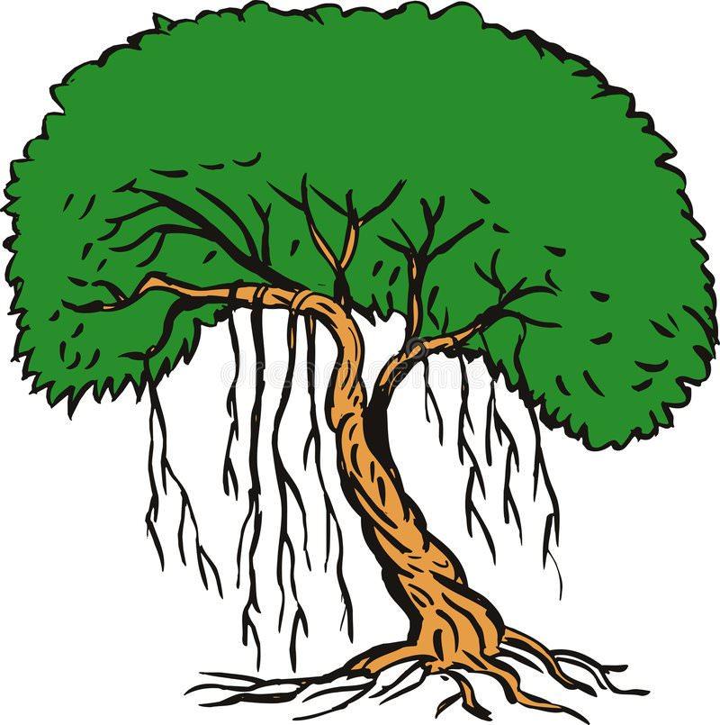 800x805 Banyan Tree Clipart