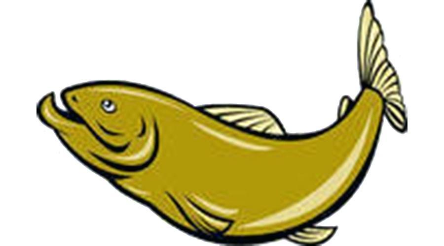 900x500 Jumping Fish Clip Art Jumping Bass Vector Jumping Bass Fish Clip