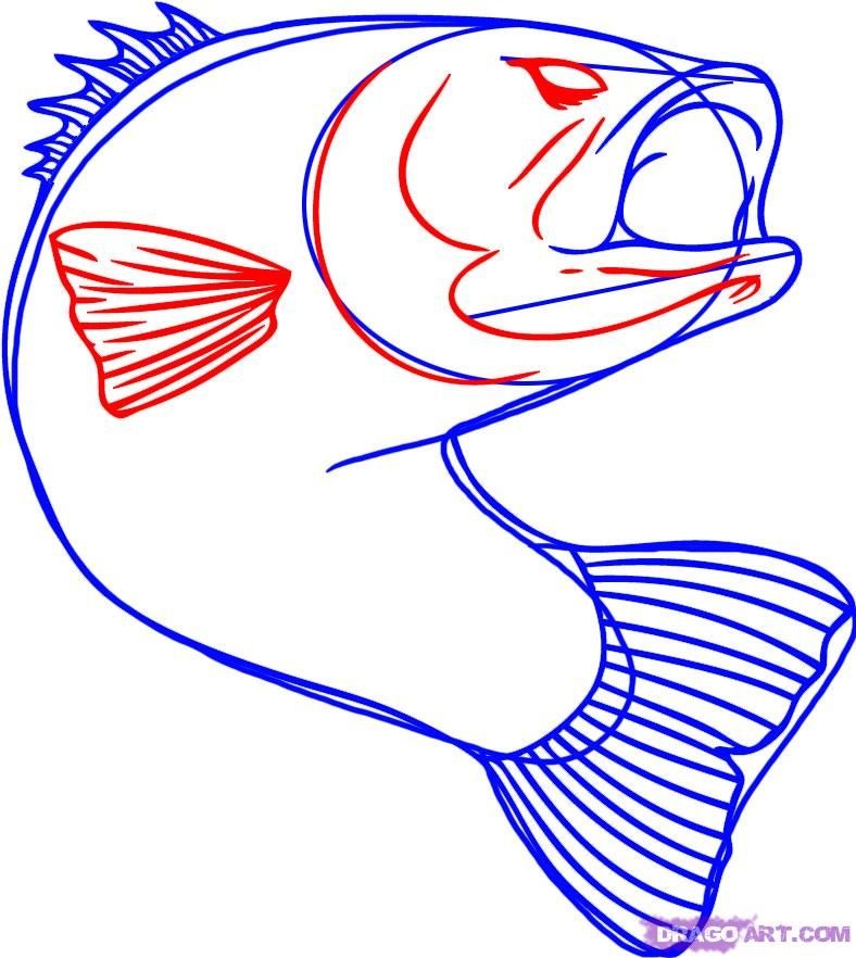 Bass Fish Clipart