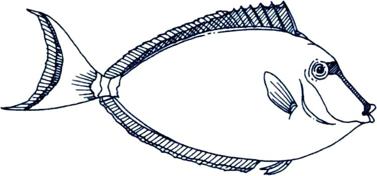 750x350 Fish Outline Clip Art Drawn Fish Saltwater Fish Free Clipart Fish