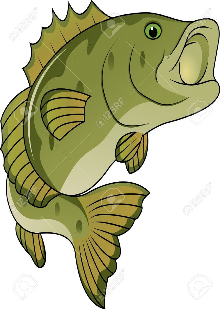 bass fish clipart at getdrawings com free for personal use bass rh getdrawings com bass fish silhouette clipart