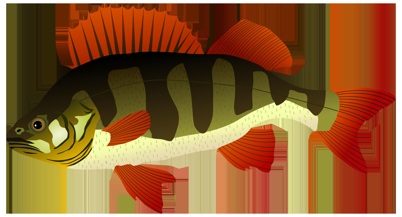 3000x1619 Perch Fish Png Clipart