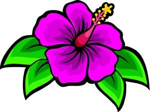 300x225 Drawing Of Beach Flower Hibiscus Clip Art Images Hibiscus Stock