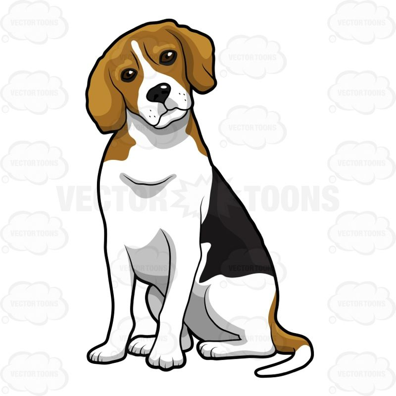 800x800 Beagle Sitting With Its Head Slightly Cocked To One Side