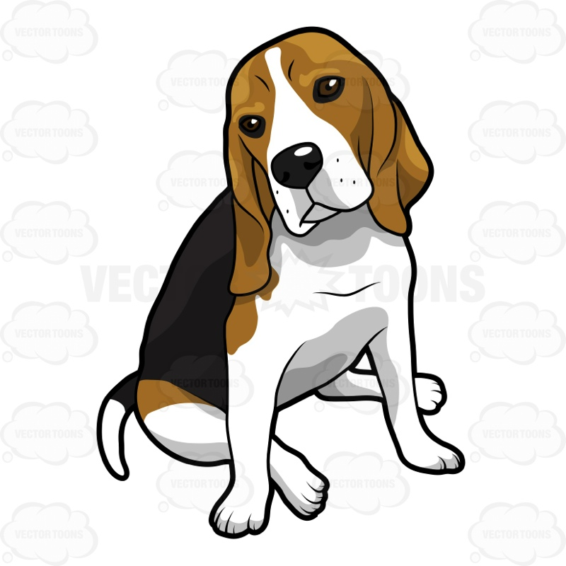 800x800 Beagle Sitting Down With Its Head Cocked To The Right Cartoon