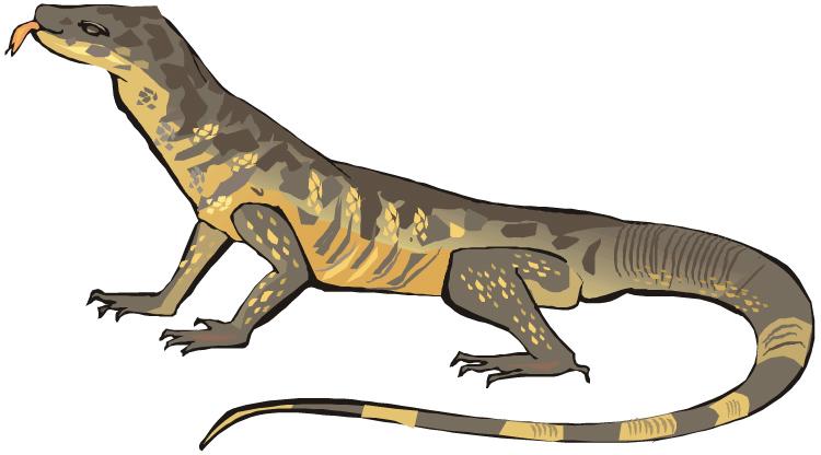 750x416 Monitor Lizard Clipart