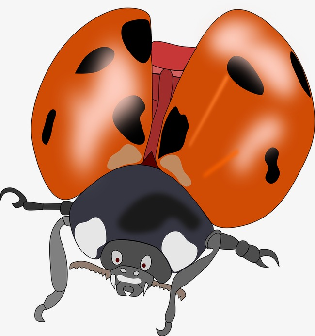 650x692 Beetle Wings, Beatles, Fly, Pests Png Image And Clipart For Free