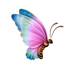 Beautiful Butterfly Clipart