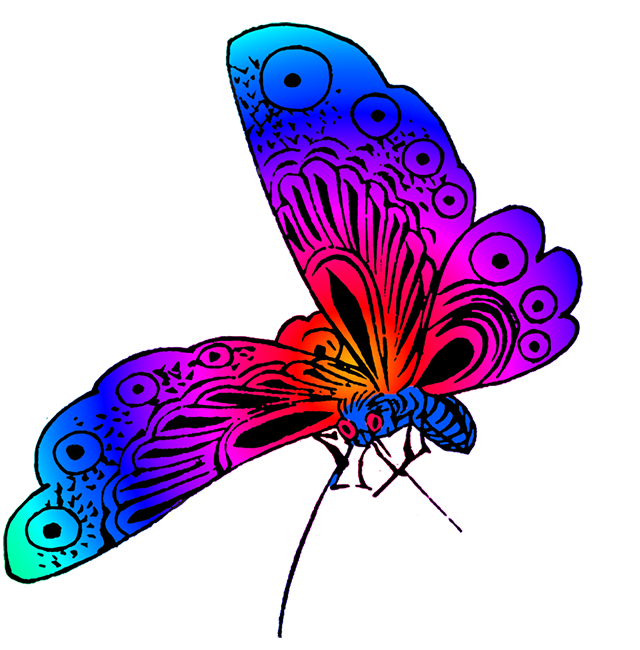 640x650 Beautiful Butterfly Images