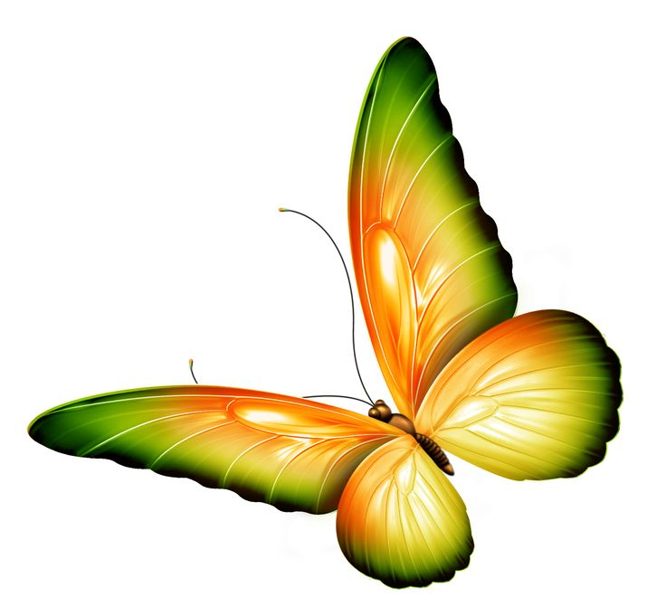736x681 Flowers And Butterflies Clipart Gallery Images)