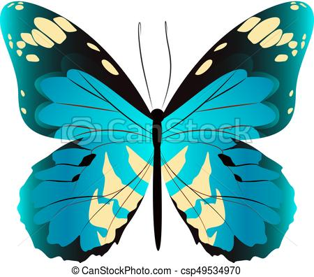 450x396 Isolated Beautiful Butterfly. Isolated Beautiful Butterfly