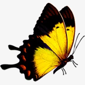 293x293 Beautiful Butterfly, Butterfly, Butterfly Fly Away, Yellow