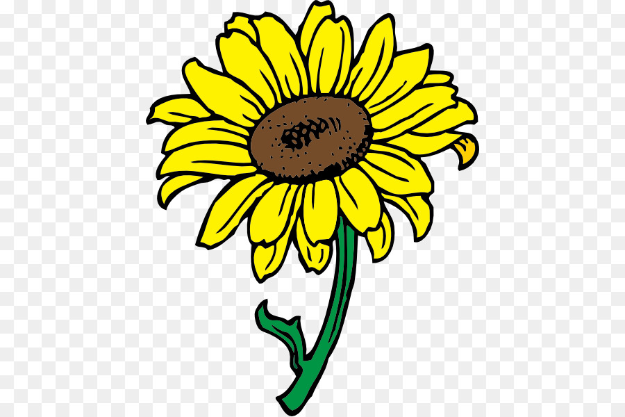 900x600 Common Sunflower Clip Art