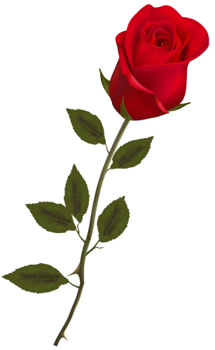 307x500 Beautiful Stem Red Rose Png Clipart Roses Rose