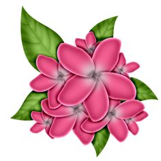 Beautiful Flower Clipart