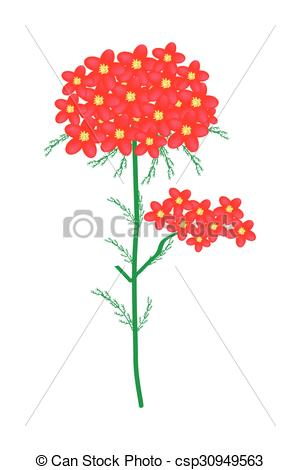 300x470 Beautiful Flower, Illustration Of Red Yarrow Flowers Or Clip