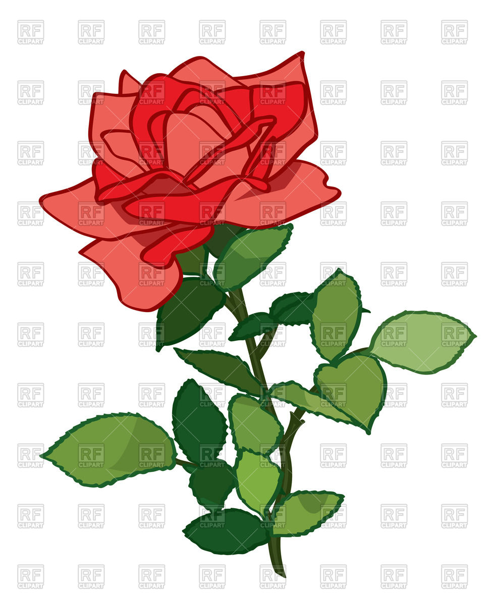 983x1200 Beautiful Red Rose With Leaves Royalty Free Vector Clip Art Image