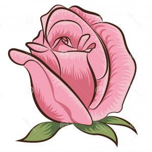 300x300 Stock Image Illustration Rose Vector Flower Clip Art Image