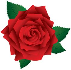 236x232 Image Of Clip Art Red Rose