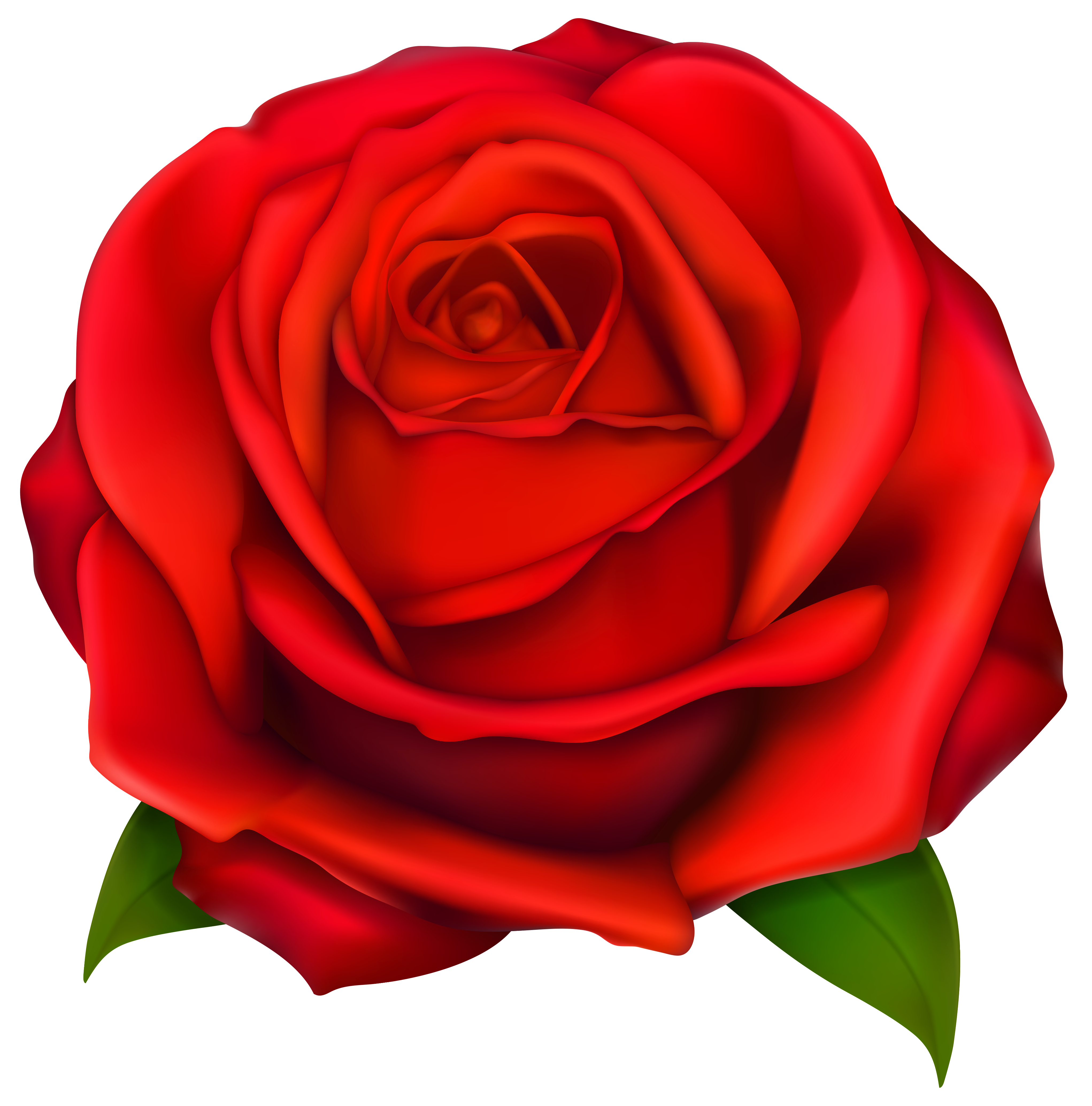 4084x4136 Image Of Clip Art Red Rose